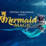 odyseaaquarium-mermaidmagic