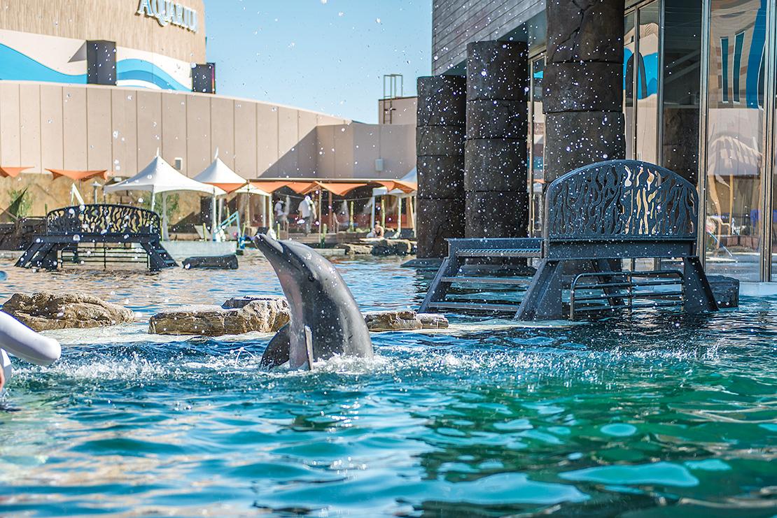 Dolphin Kai