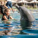 Family Fun at Dolphinaris Arizona