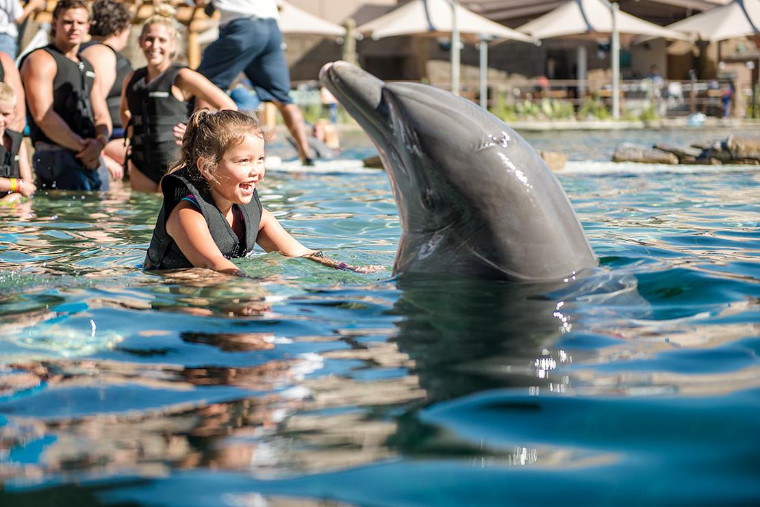 Jax Happy Dolphin