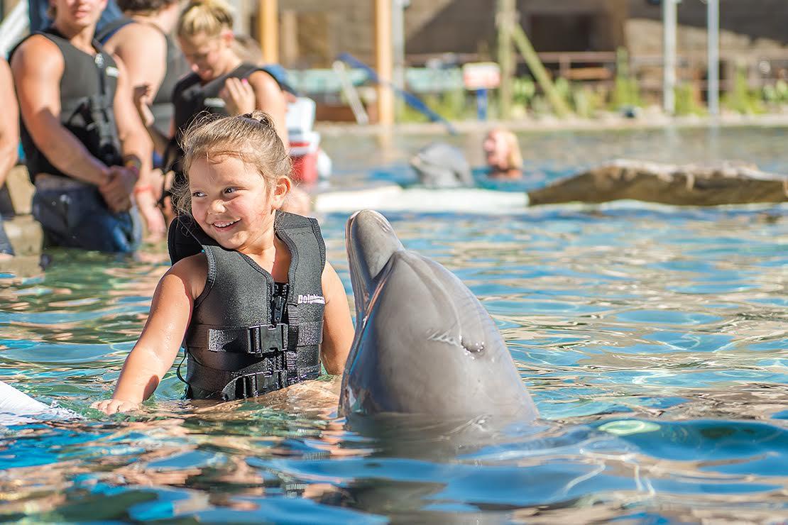 Jax sweet dolphin