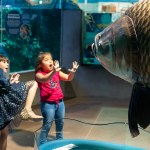 Monster Fish at OdySea Aquarium through May 5